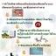 *20ซอง Wemix อาหารเสริมเพื่อสุขภาพและความงาม เห็นผลใน1กล่อง thumbnail 8